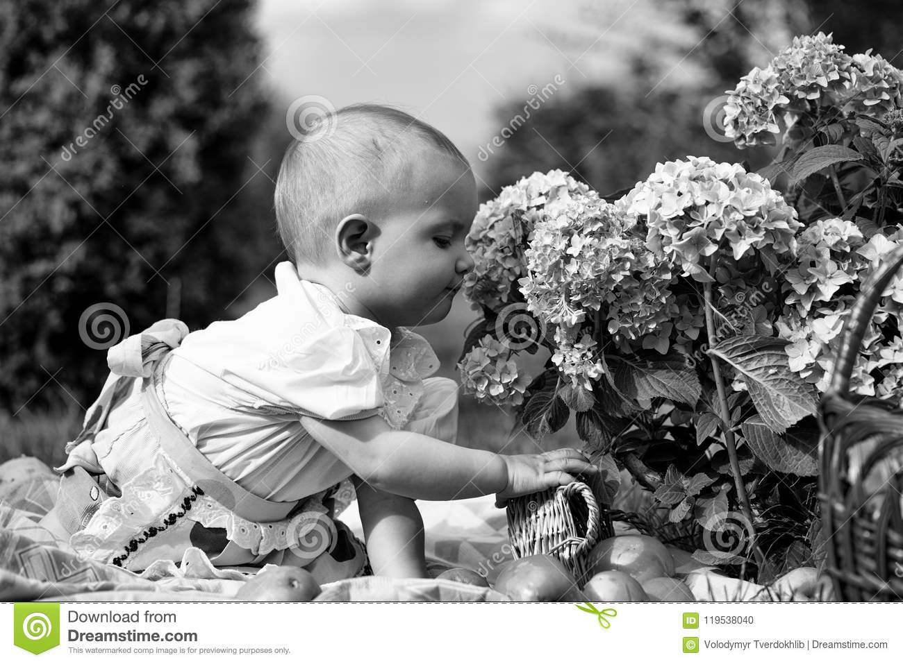 b46ec157f325 Small Child Is Sniffing Flowers. Baby Girl On Picnic Stock Photo ...