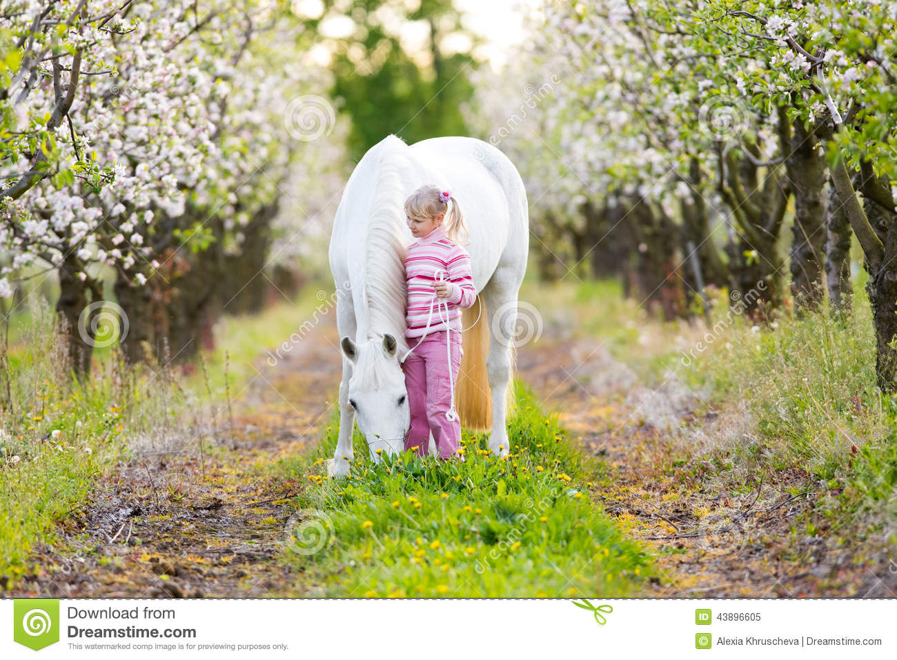 Small child with a white horse in apple orchard