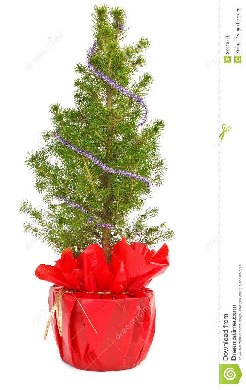 Small Christmas Tree In Decorative Pot Royalty Free Stock