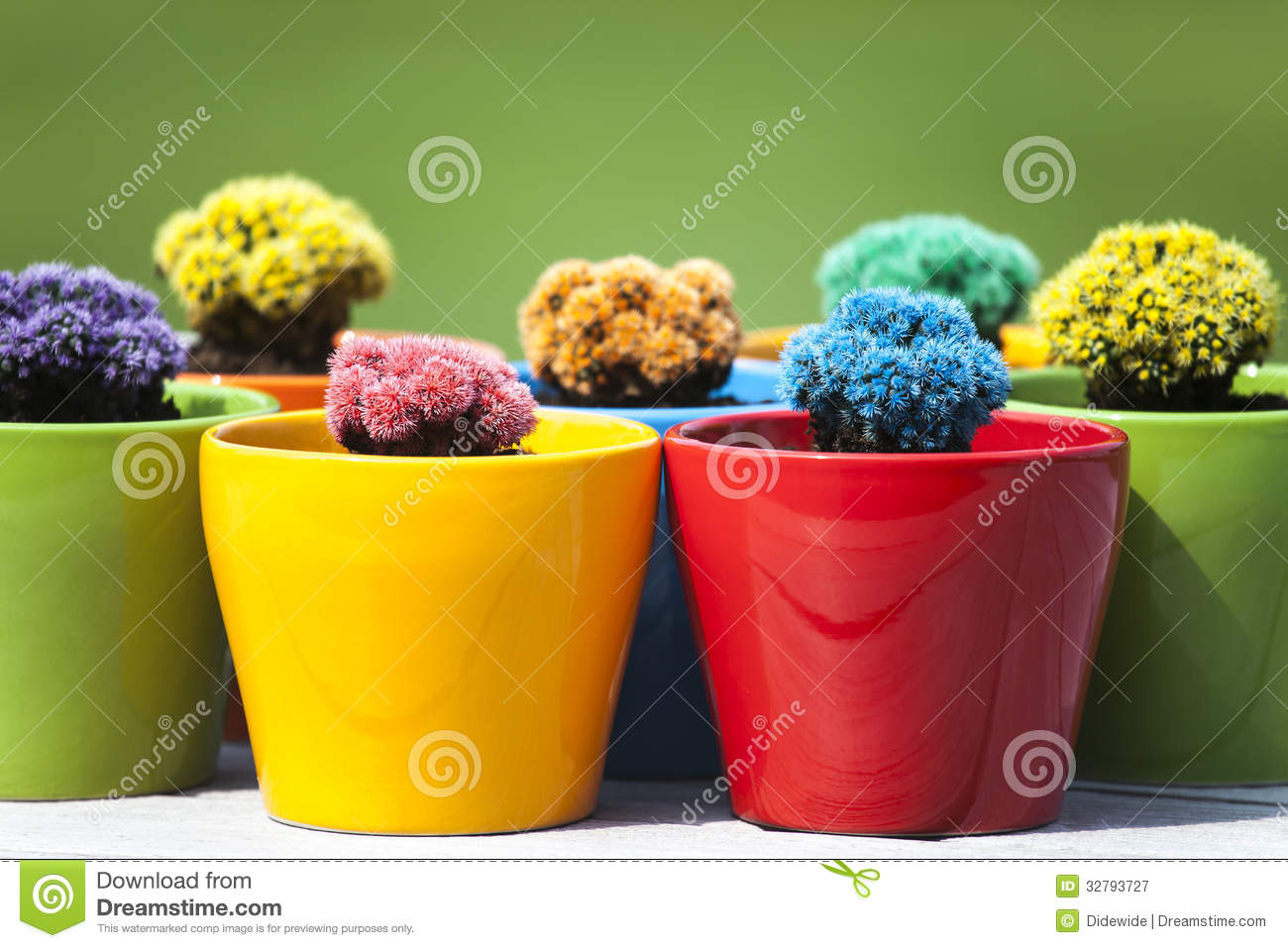 Small colored cacti stock image. Image of plant, sand - 32793727