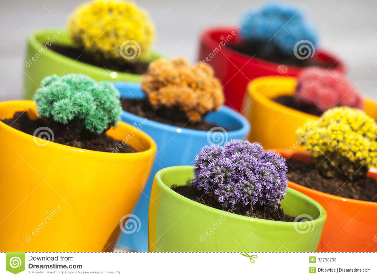 Small Colored Cacti Stock Photos Image 32793733