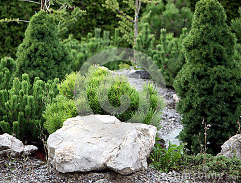 Small conifers on the rock garden stock image image Small rock garden