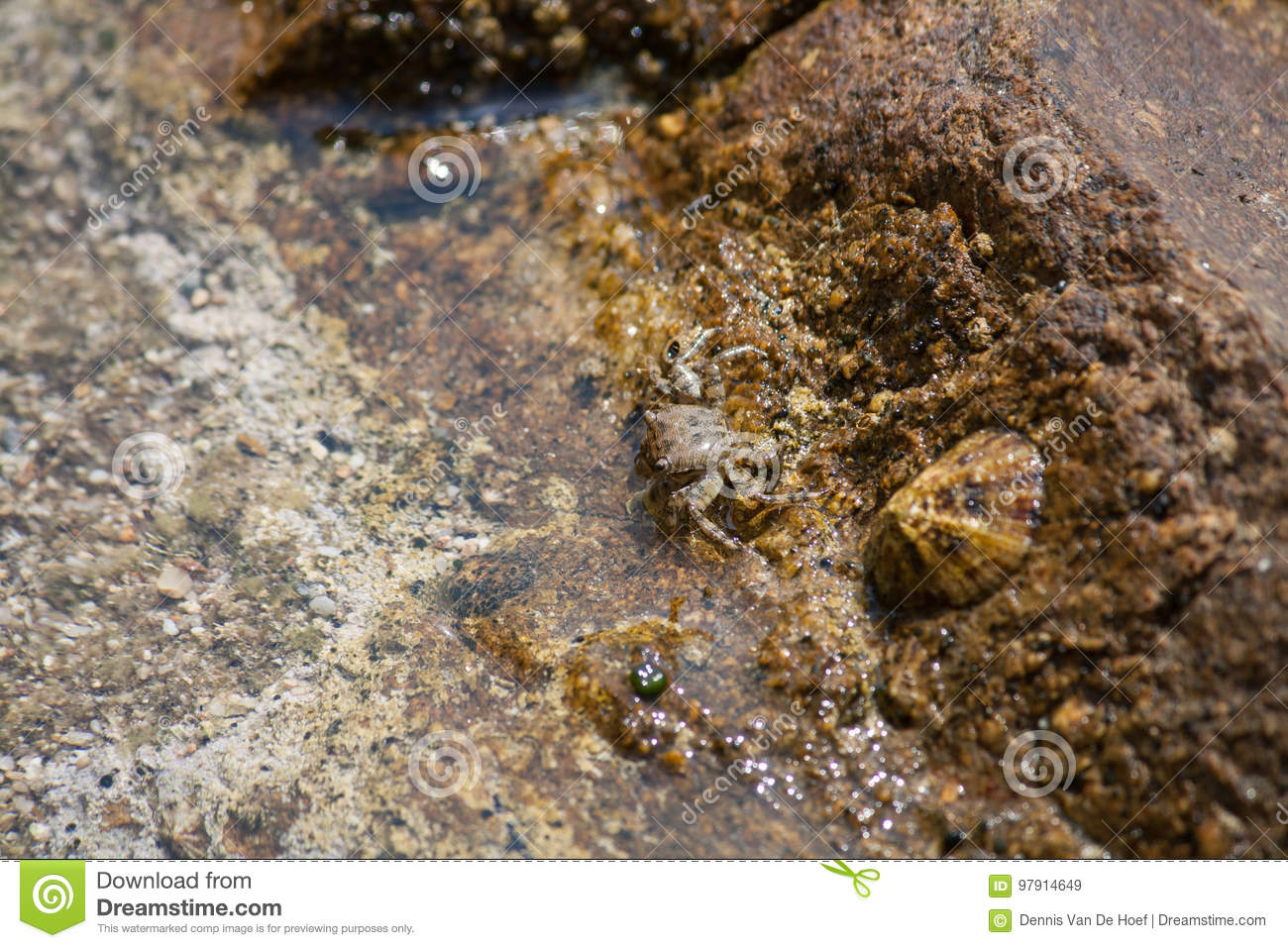 A small crab on stone on shore.