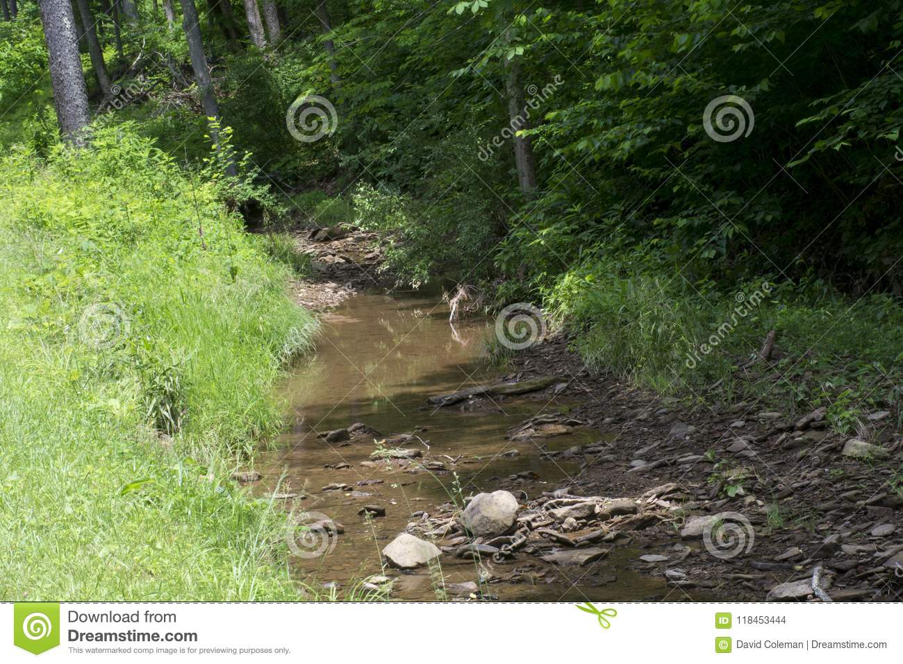 Stream flowing from the forest