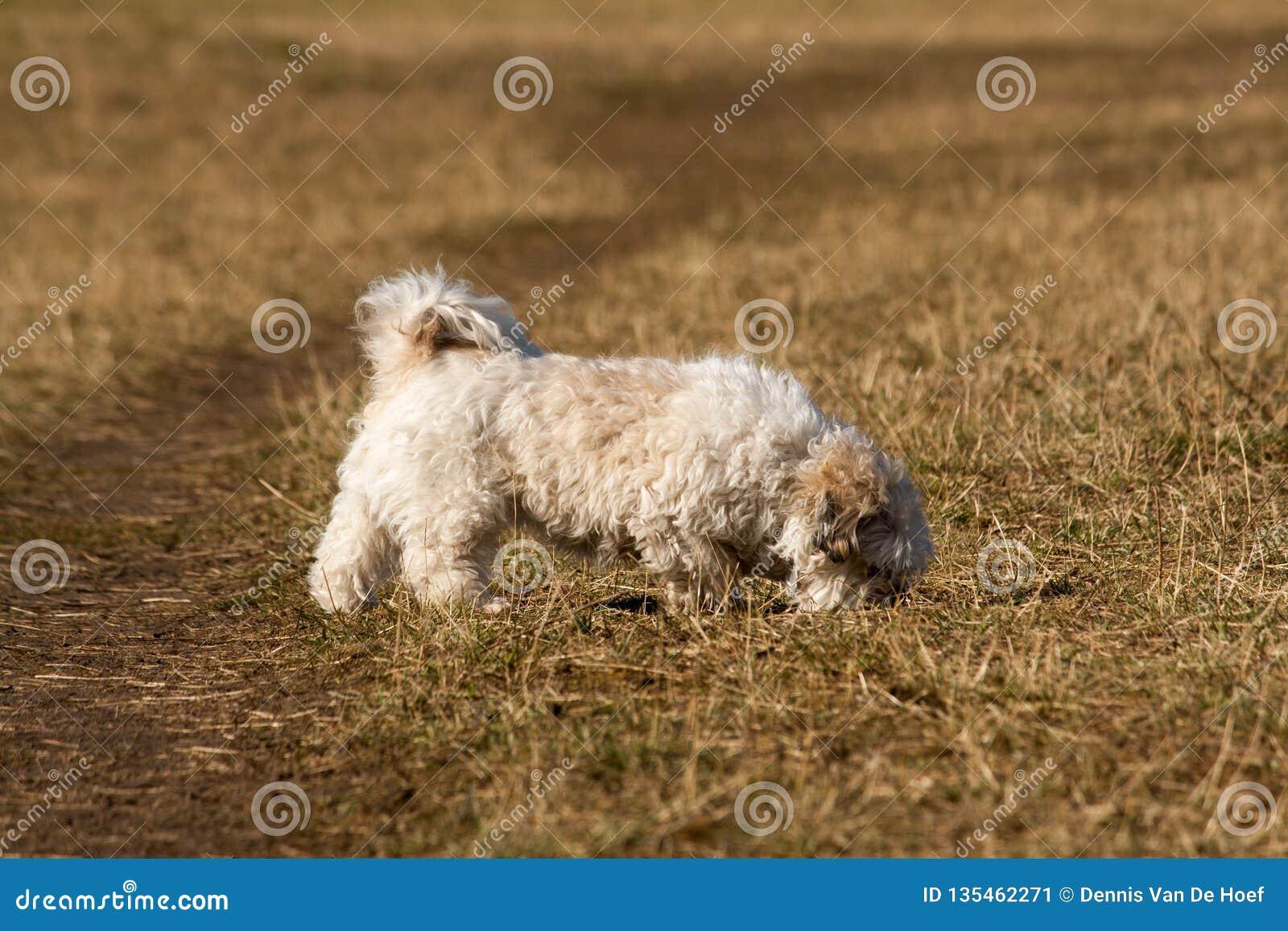 Small crossbreed dog walking.