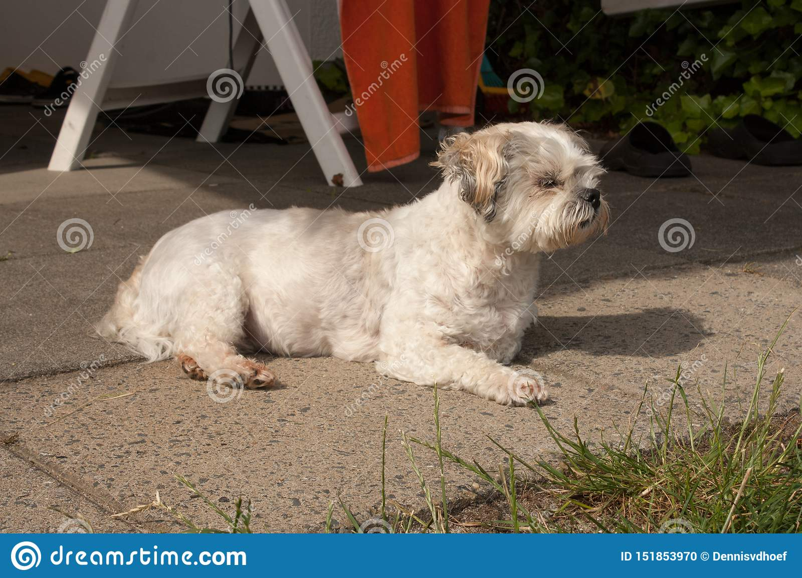 Small crossbreed dog laying on the ground.