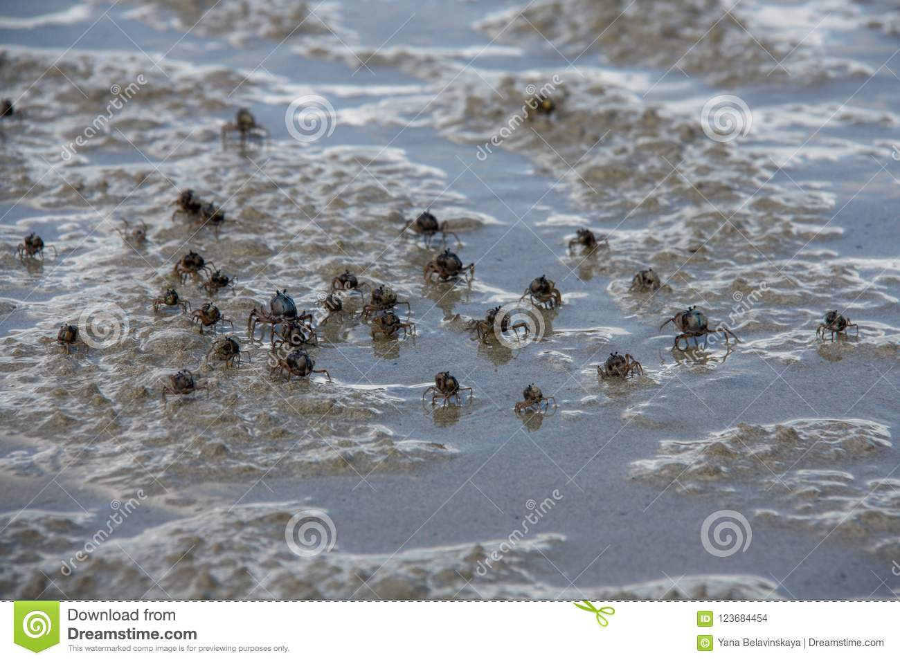 Small cute crabs running on the sand sea beach