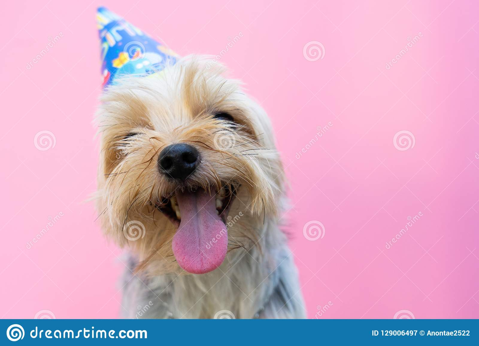 Small Cute Funny Yorkshire Terrier Puppy Dog In A Christmas In W