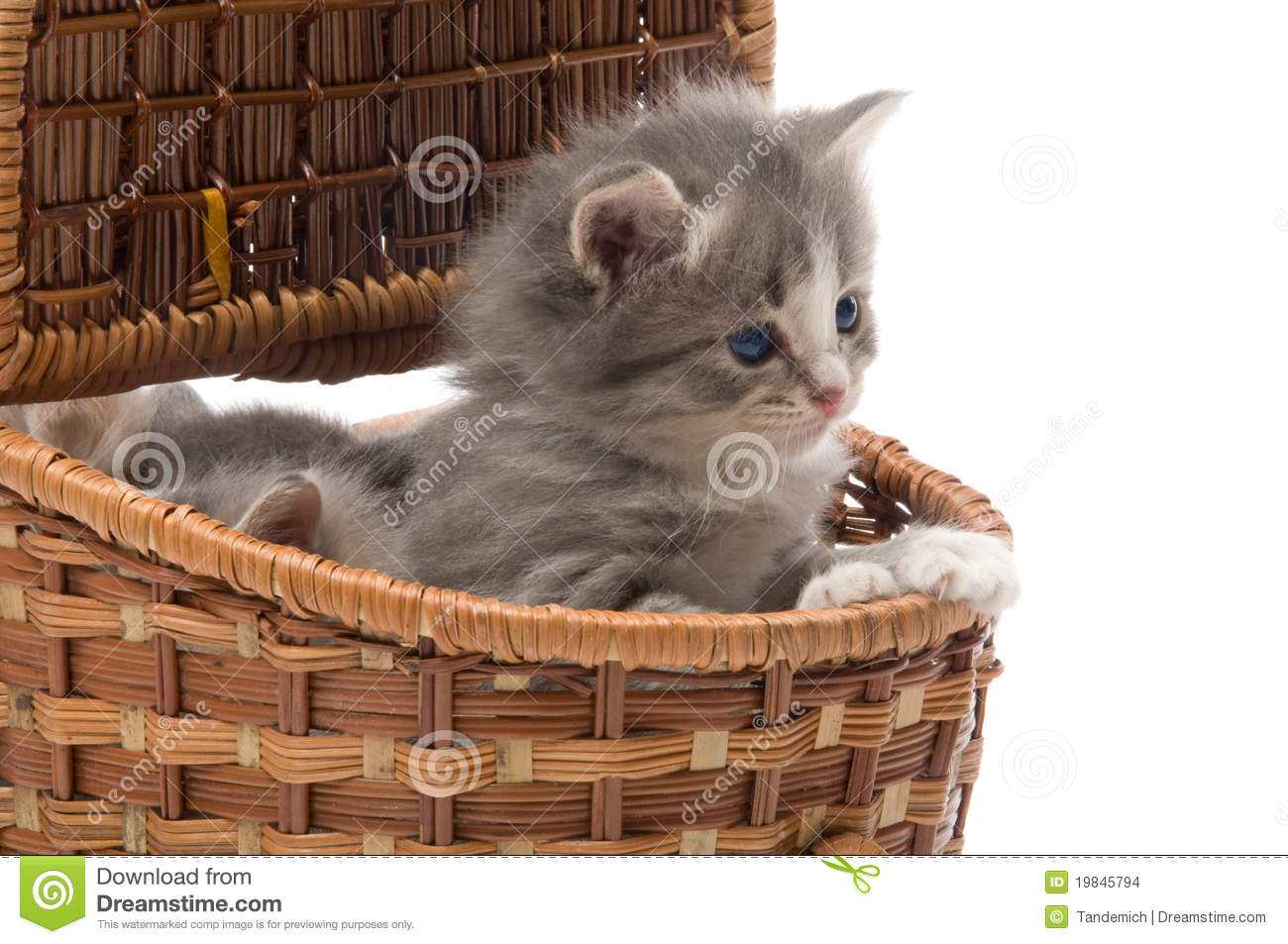 Small Cute Kitten Sitting In A Basket Close Up Stock