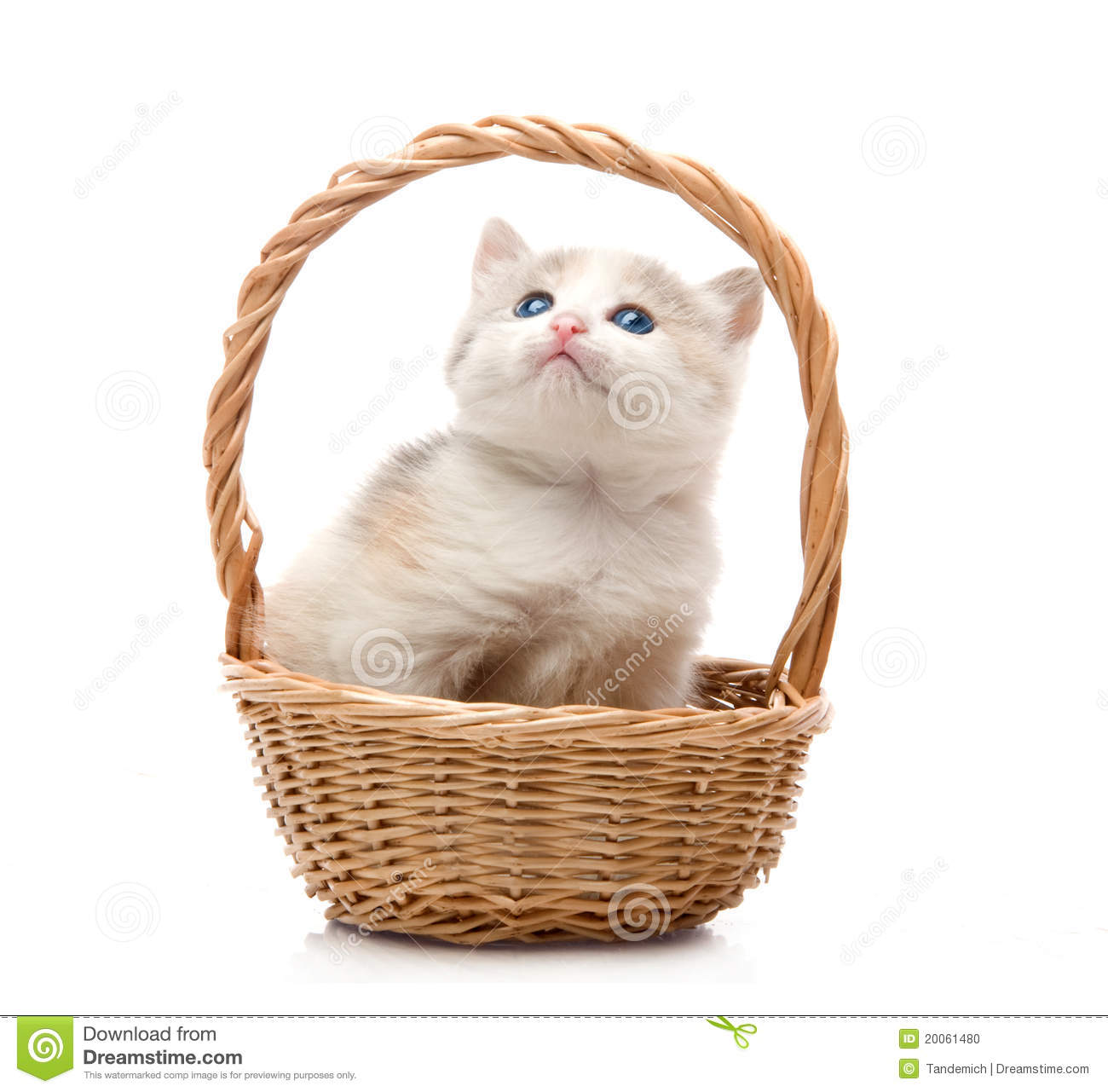 Small Cute Kitten Sitting In A Basket, Close-up Stock ...
