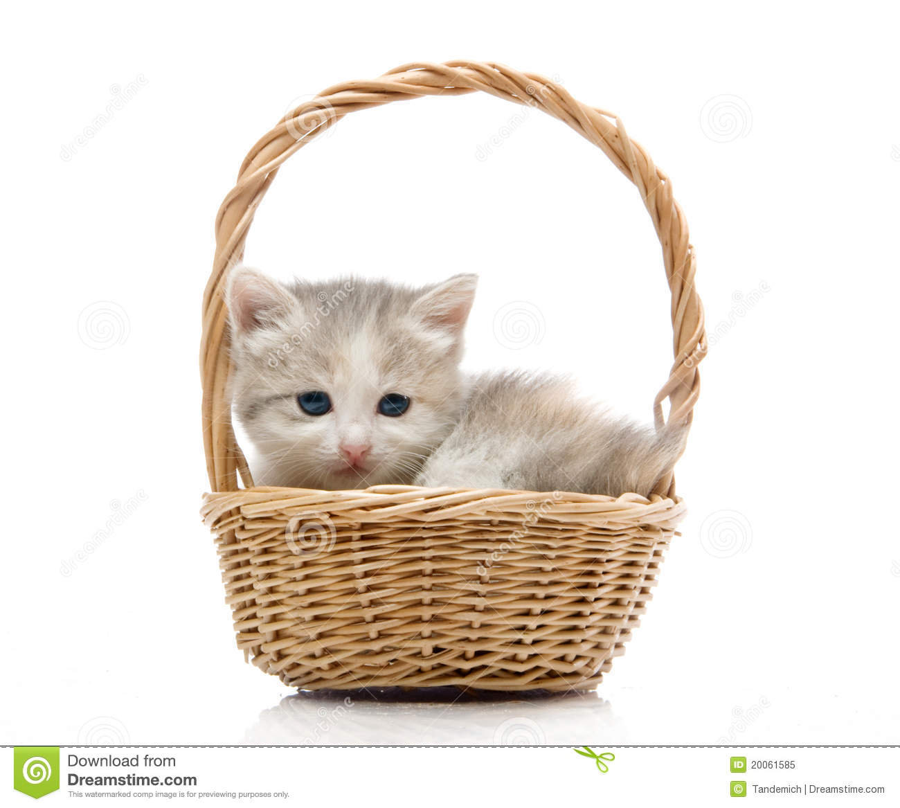 Small Cute Kitten Sitting In A Basket, Close-up Royalty ...