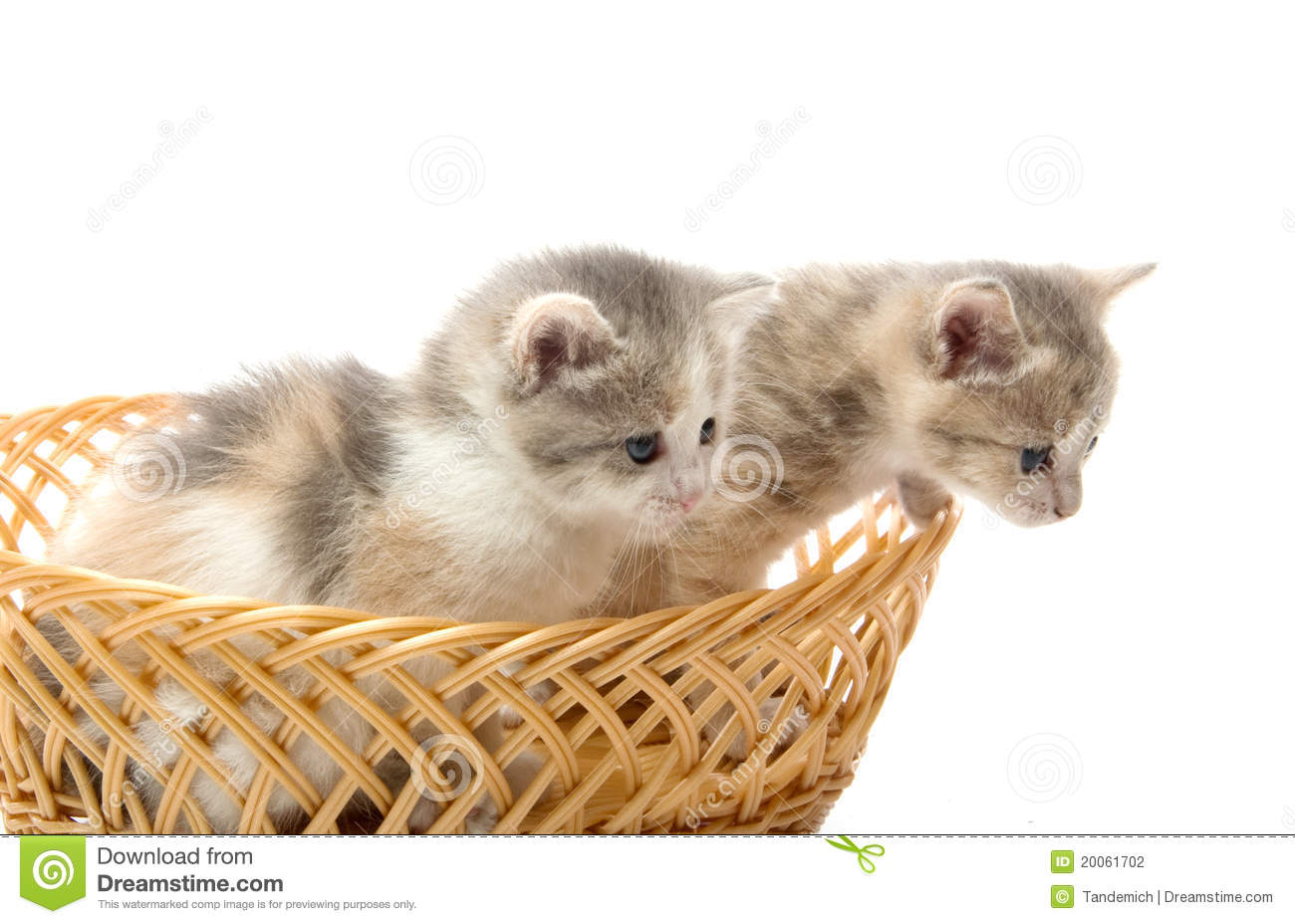 Small Cute Kittens Sitting In A Basket, Close-up Stock ...
