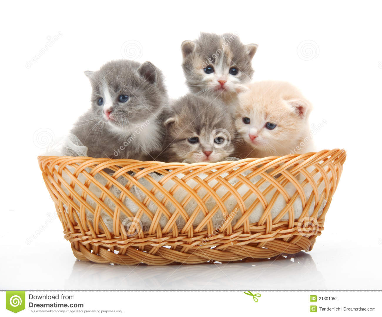 Cat Basket Clipart : Small cute kittens sitting in a basket close up stock