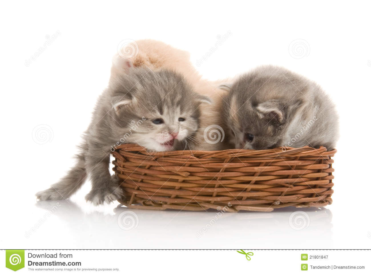 Small Cute Kittens Sitting In A Basket, Close-up Royalty ...