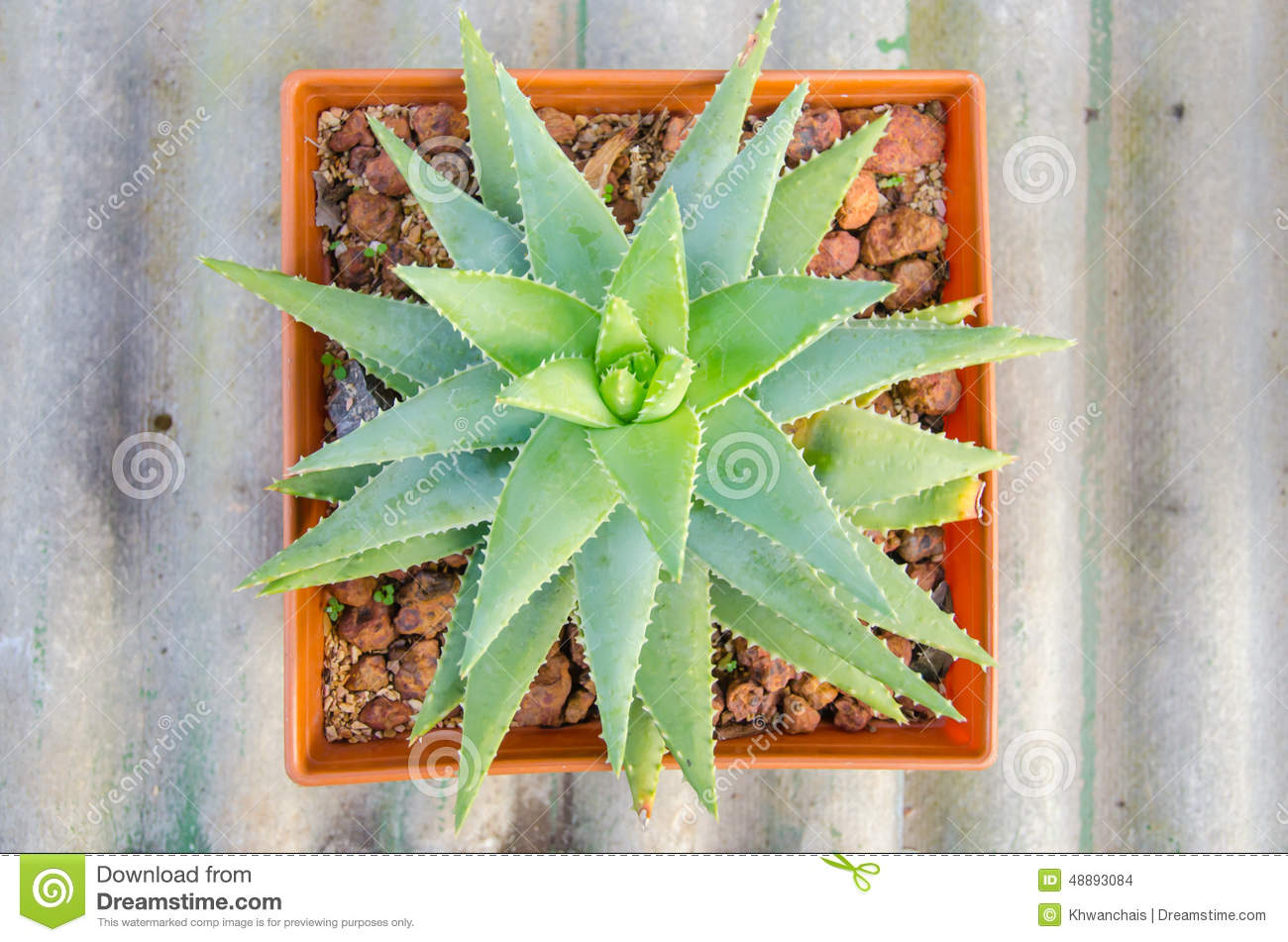Small different types of cactus plants stock photo for Different kinds of plants