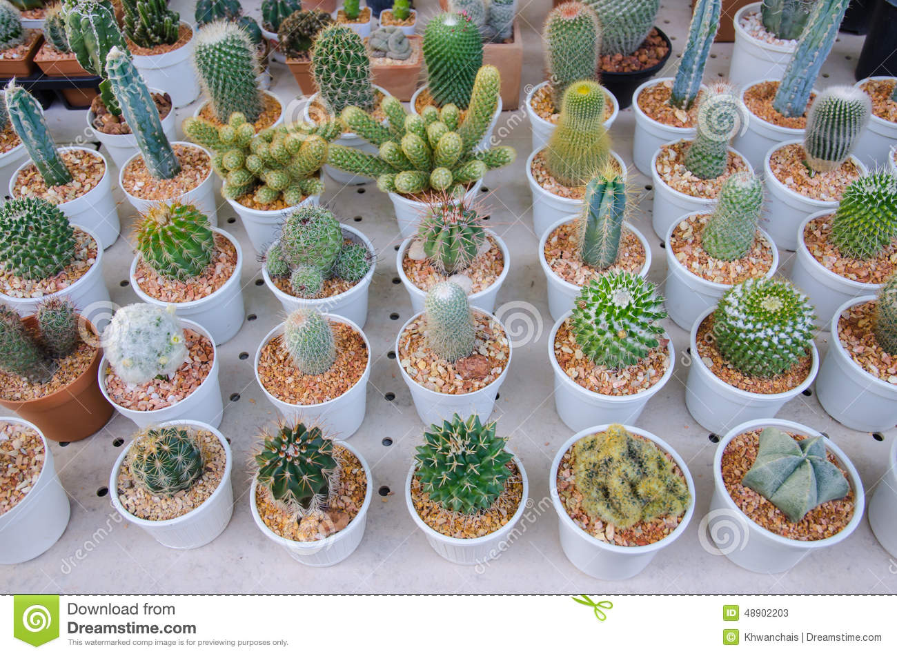 Small Different Types Of Cactus Plants Stock Image