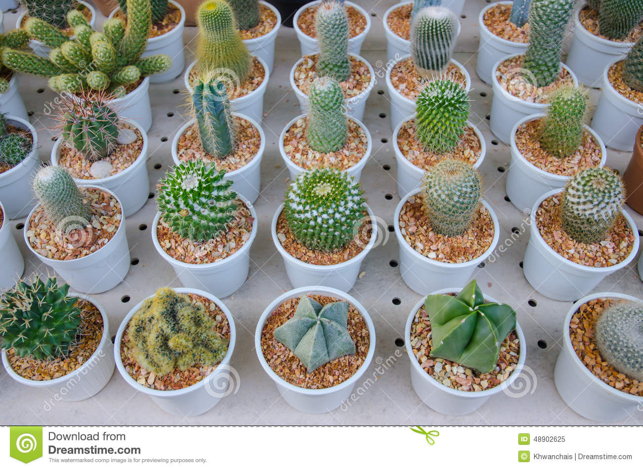 small different types of cactus plants stock image image 48902625. Black Bedroom Furniture Sets. Home Design Ideas