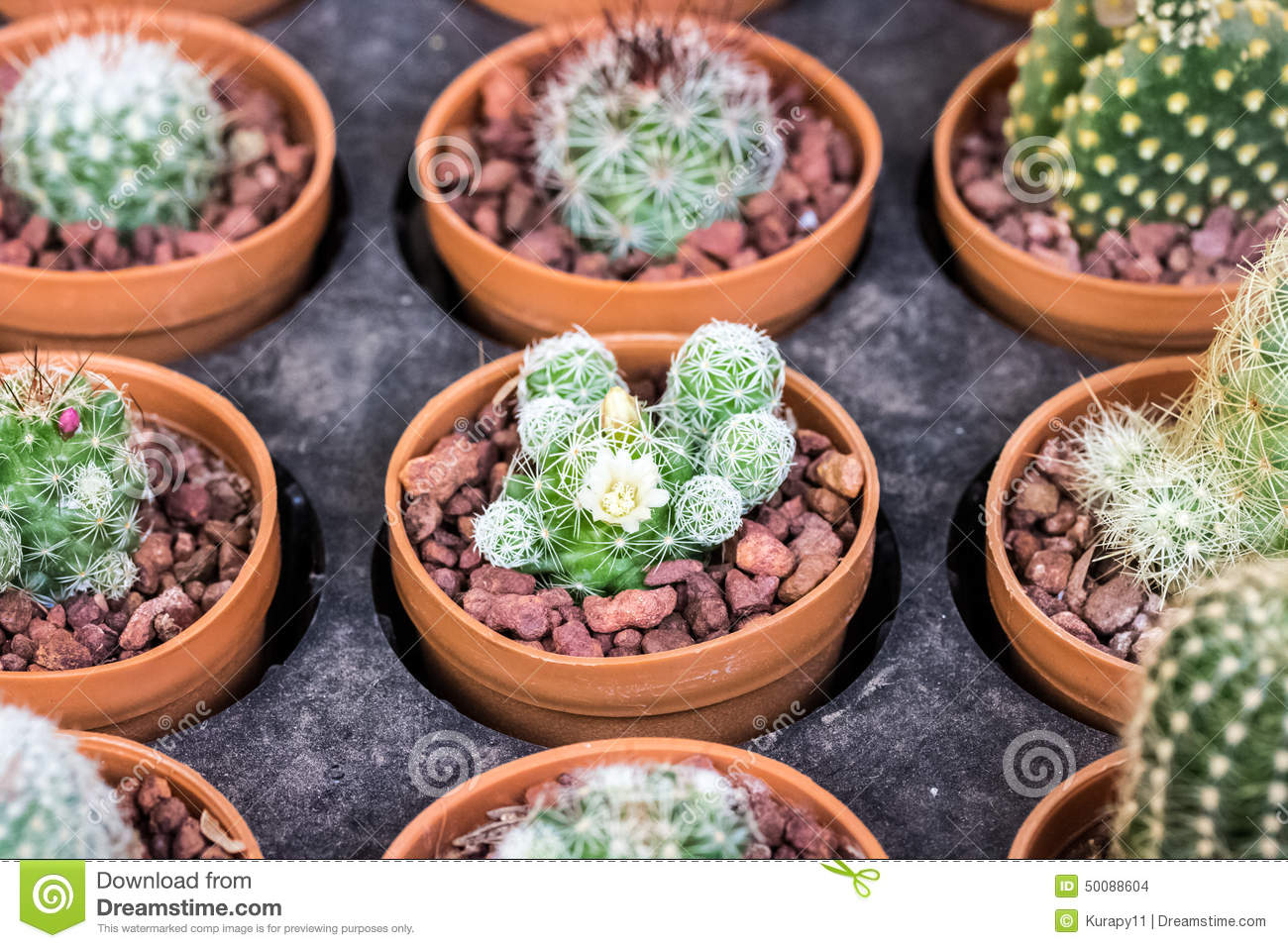 Small different types of cactus plants stock photo for Antejardines pequenos