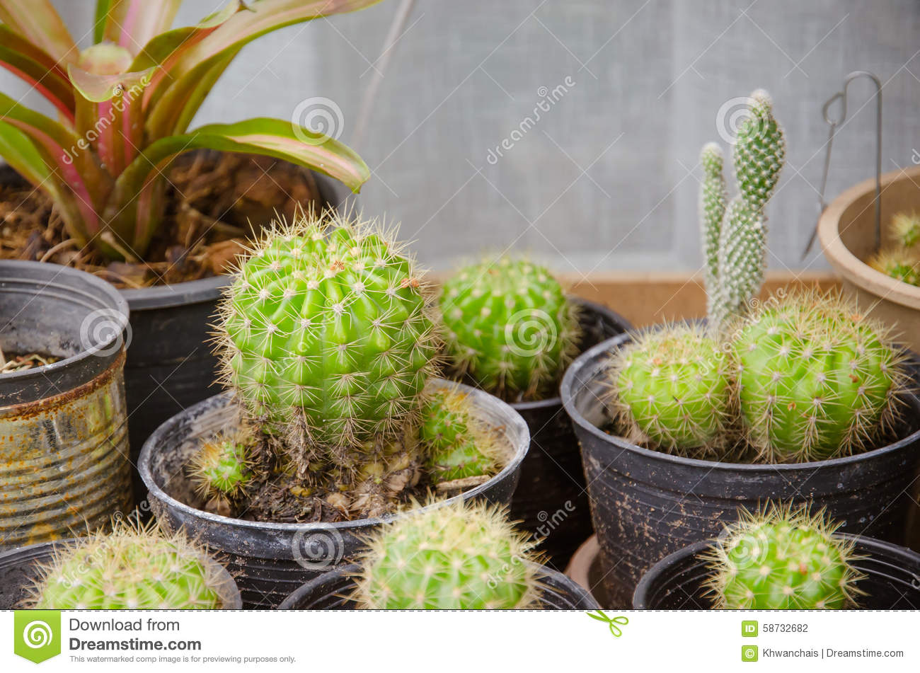 Small different types of cactus plants stock photo for Different types of succulent plants