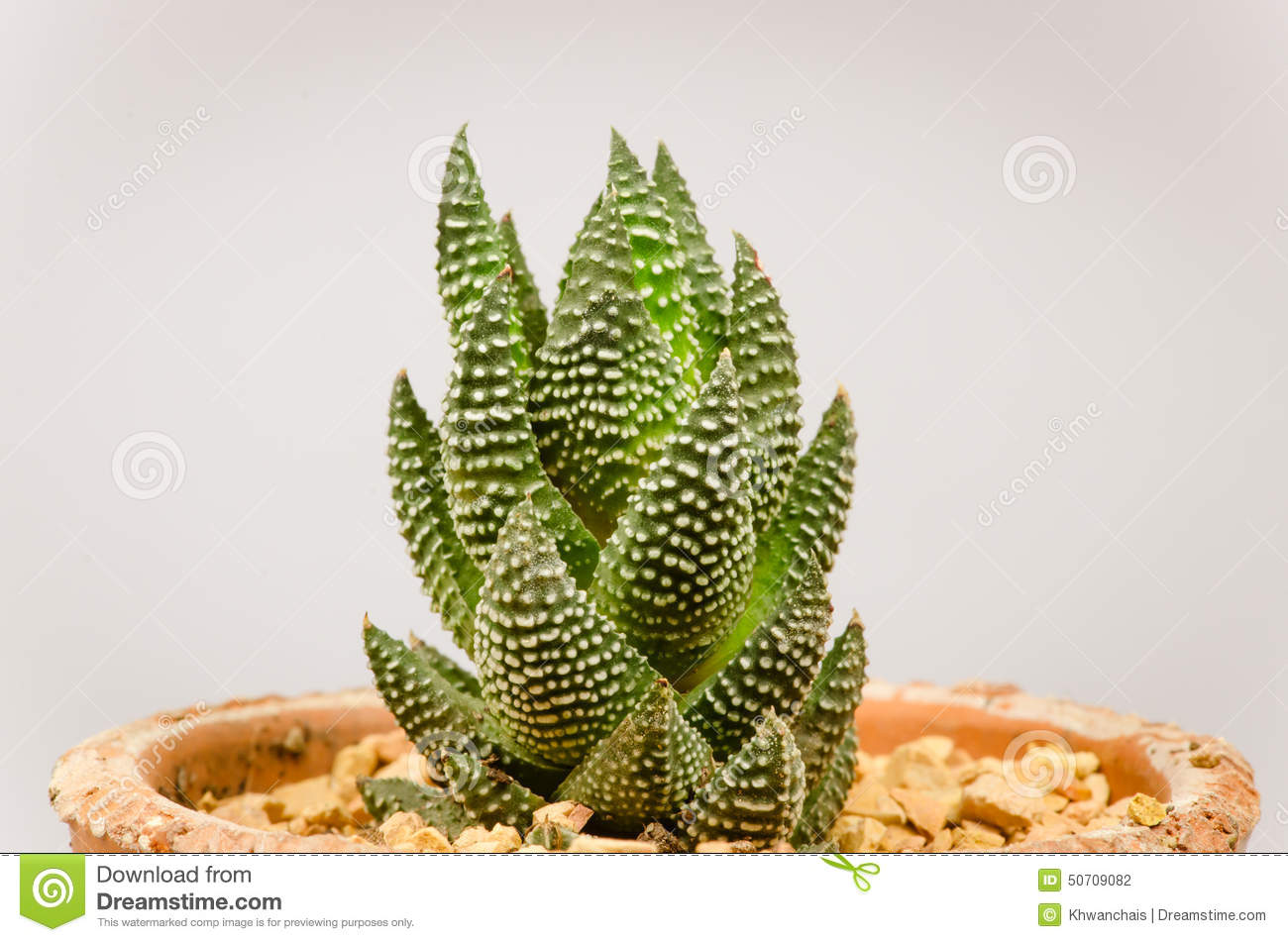 small different types of cactus plants stock photo image of