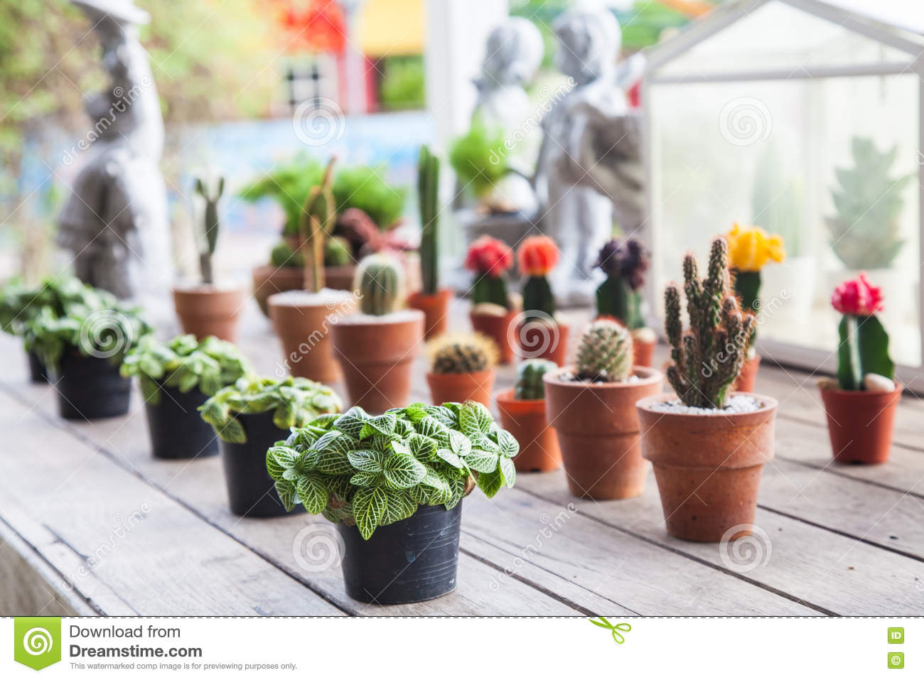 Small different types of cactus plants in a row on wooden - Small indoor cactus types ...