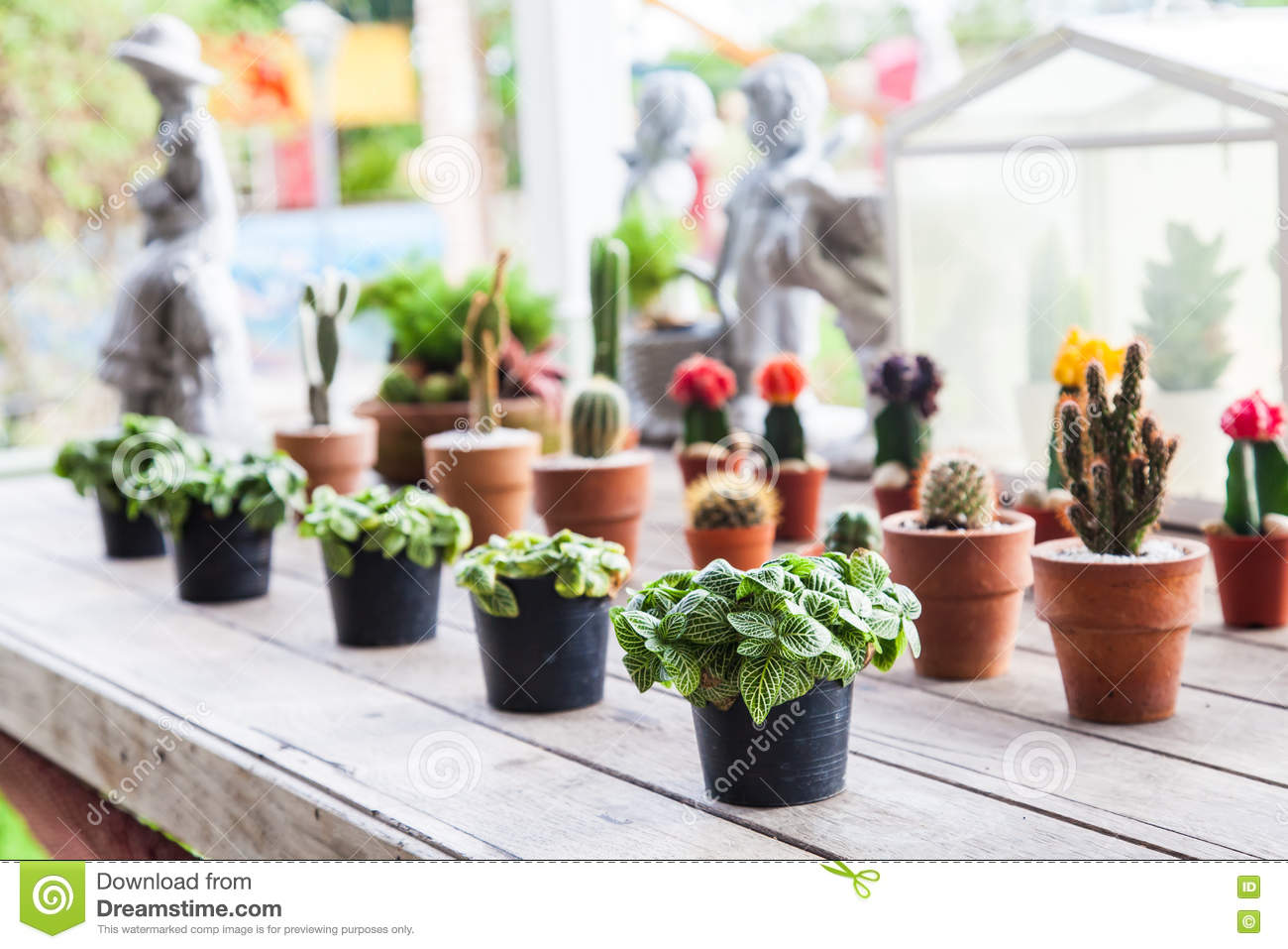 Small Different Types Of Cactus Plants In A Row On Wooden