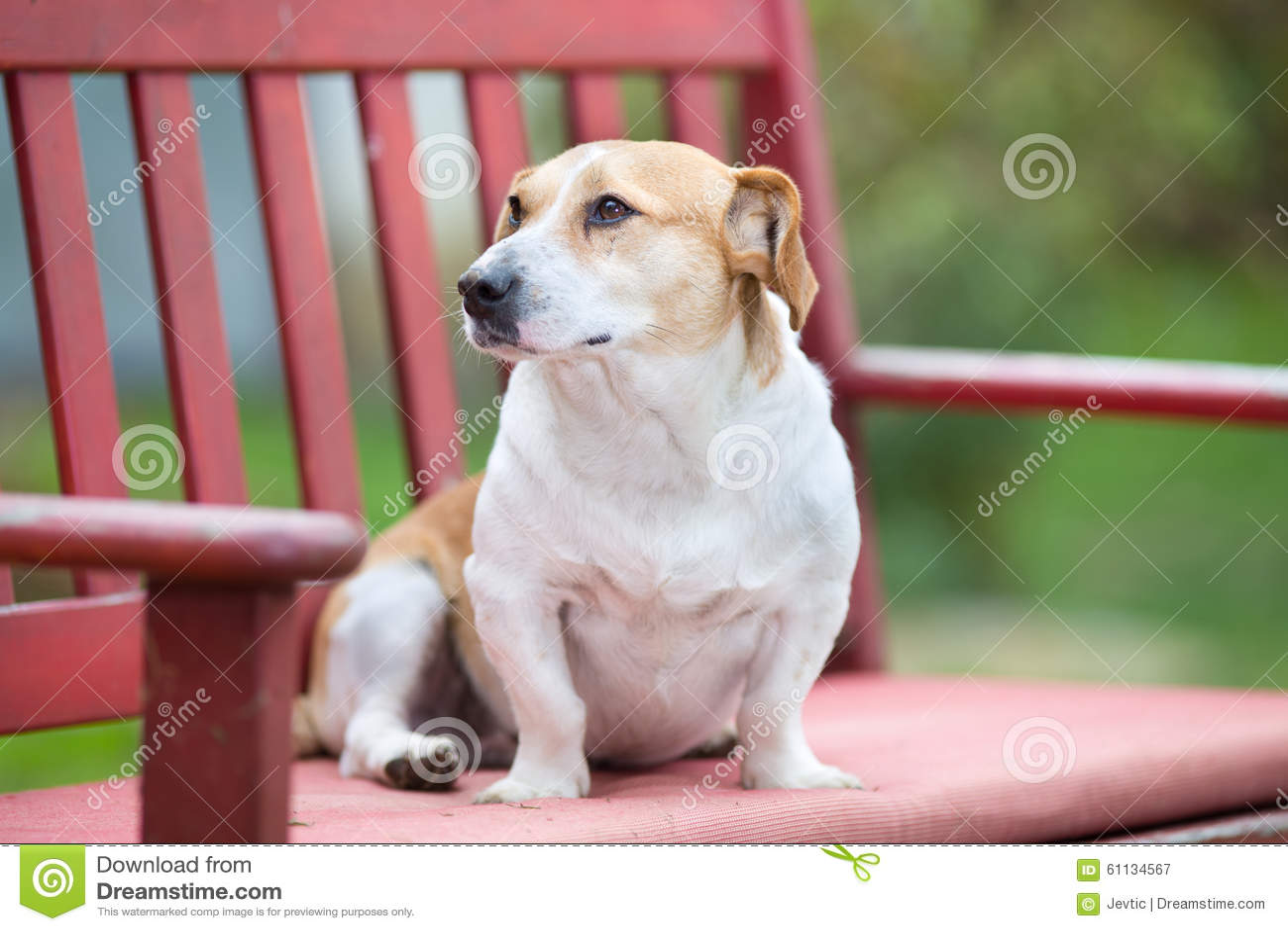 Wondrous Small Dog On The Bench Stock Image Image Of Crooked 61134567 Frankydiablos Diy Chair Ideas Frankydiabloscom