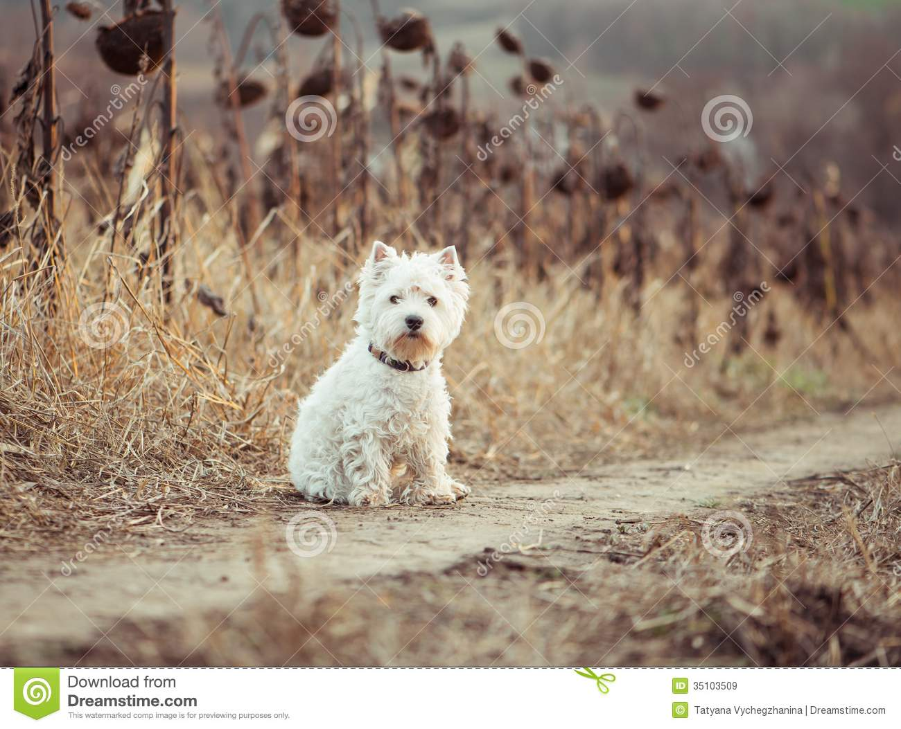 Small Dog Breeds Small dog breeds white terrier