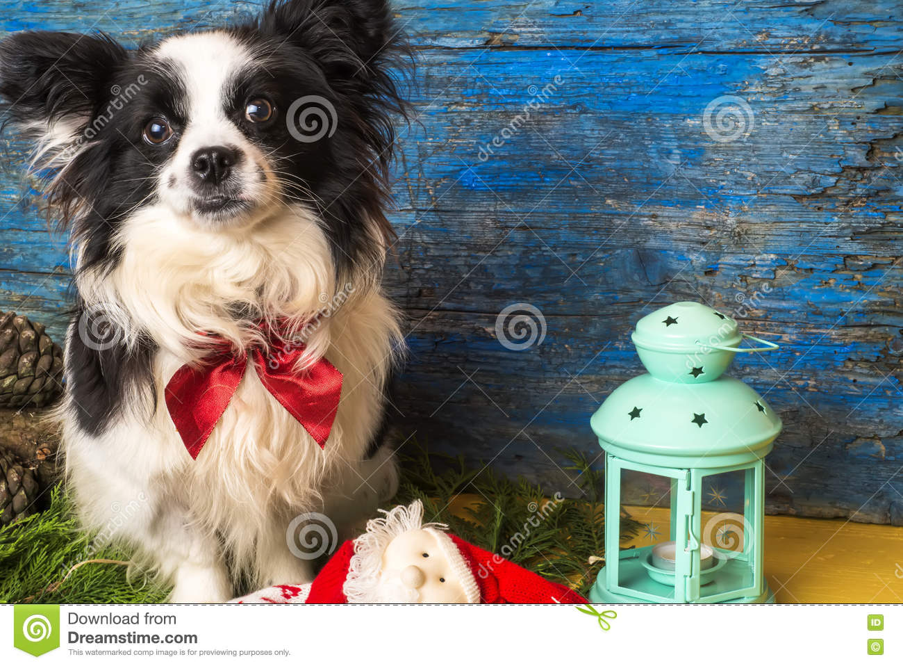 Small dog Christmas card stock photo. Image of xmas, cards - 77483210