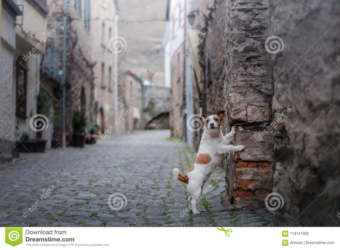 Small dog in the old town. A pet in the city.