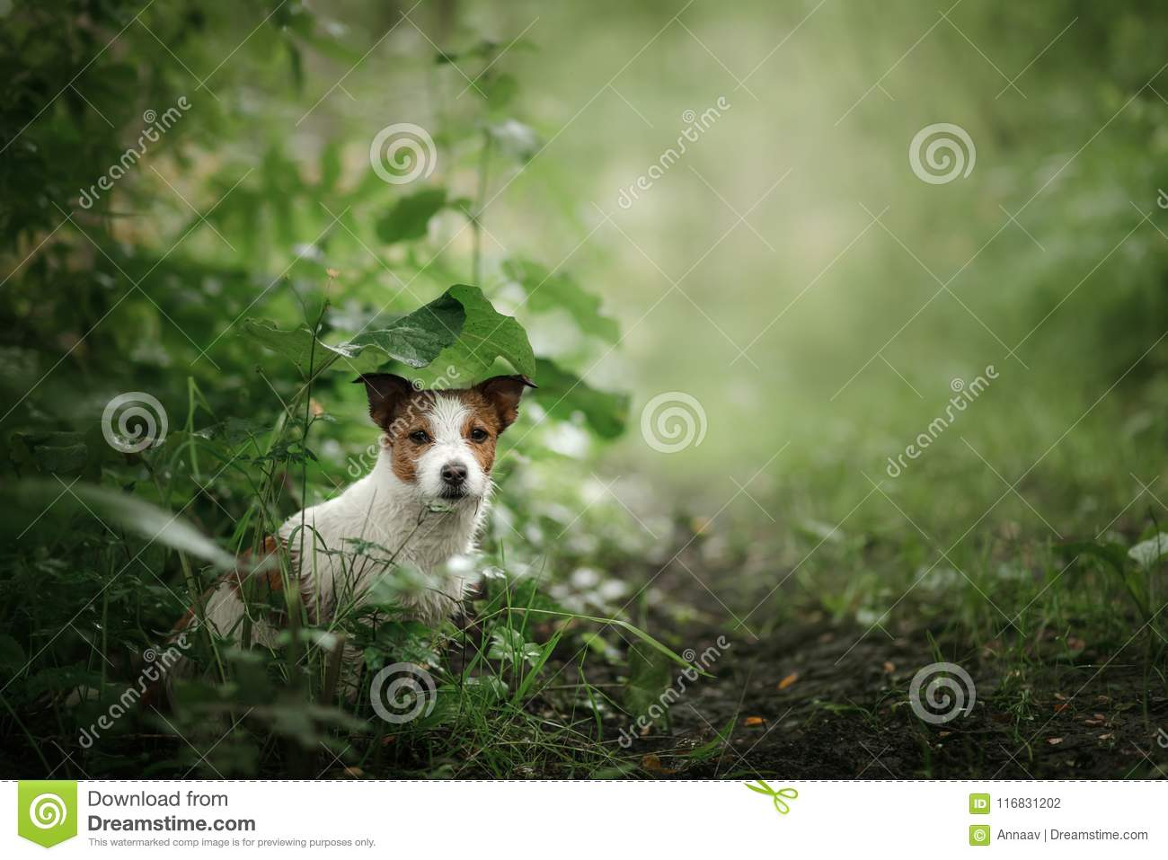 Small dog in the rain hides under a leaf