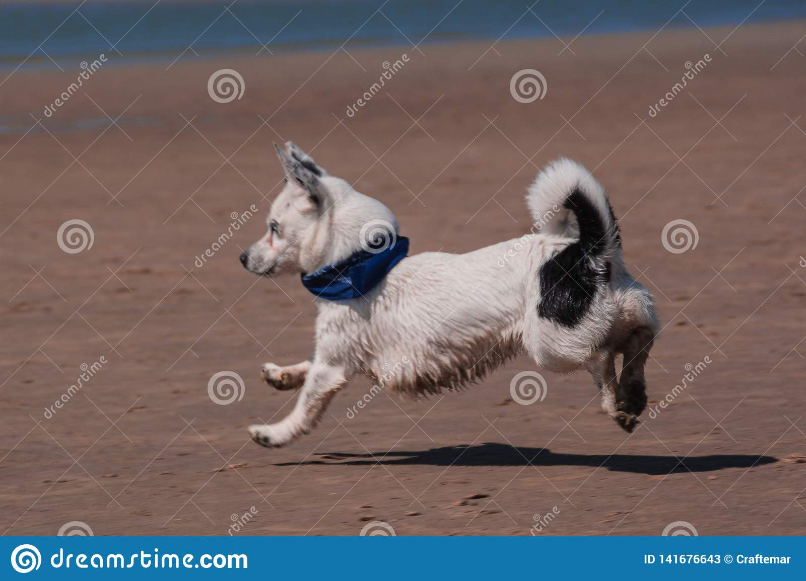 Small dog on the sandy beach