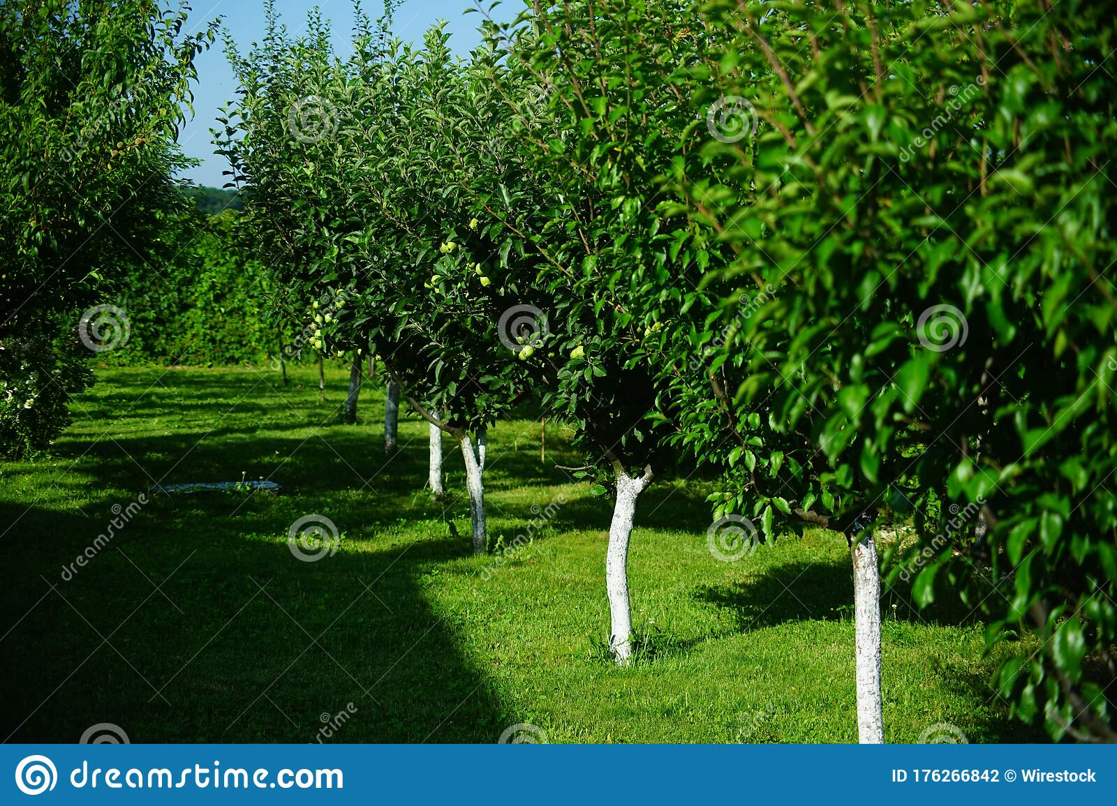 Small European Orchard In The Summer Stock Photo - Image of abundance,  small: 176266842