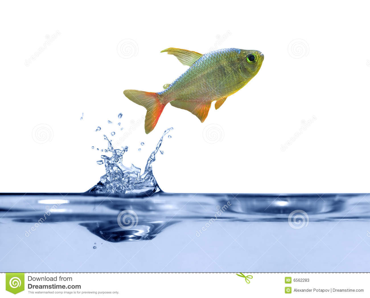 Small fish above blue water stock photos image 6562283 for Above water fish tank
