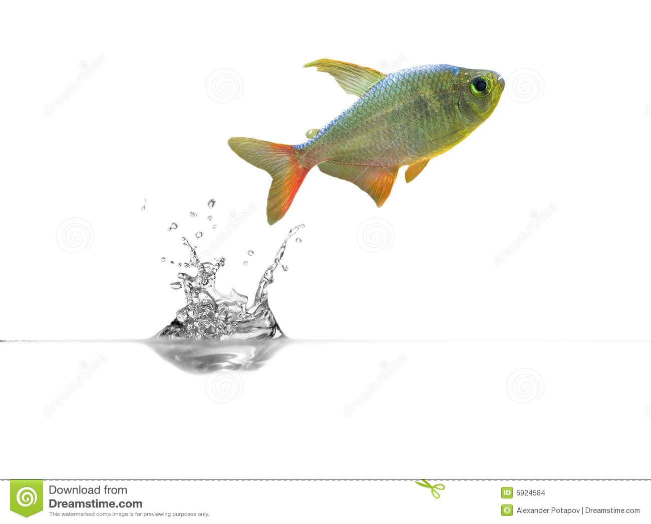 Small fish above transparent water stock images image for Dream about fish out of water