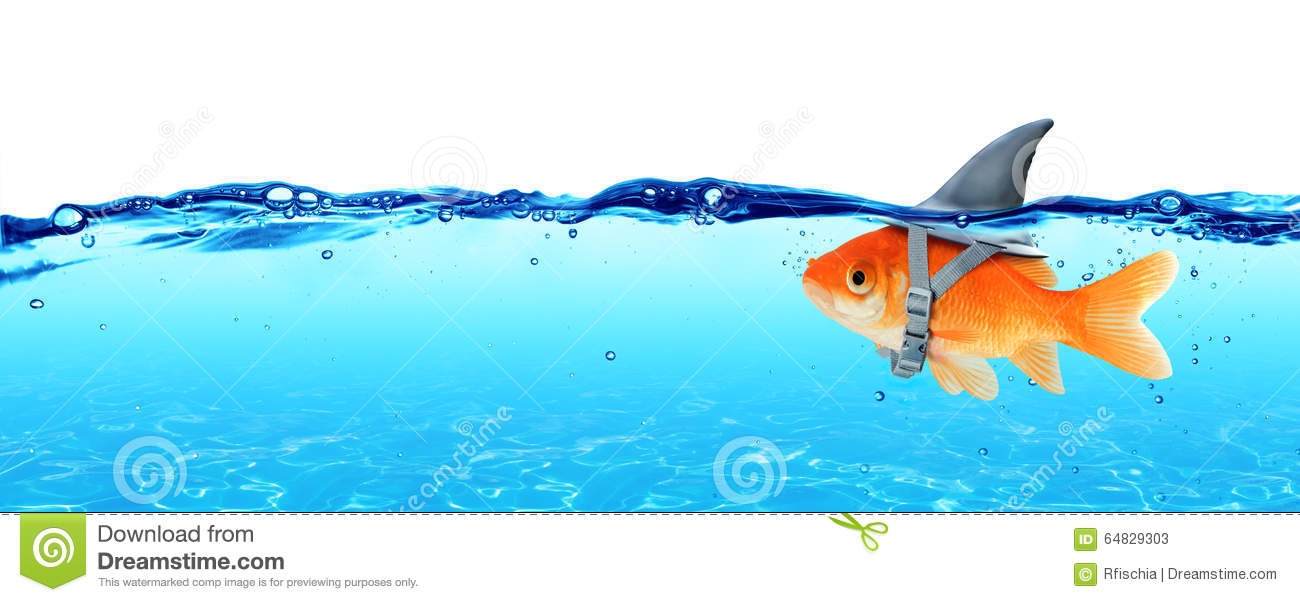 Small Fish With Ambitions Of A Big Shark