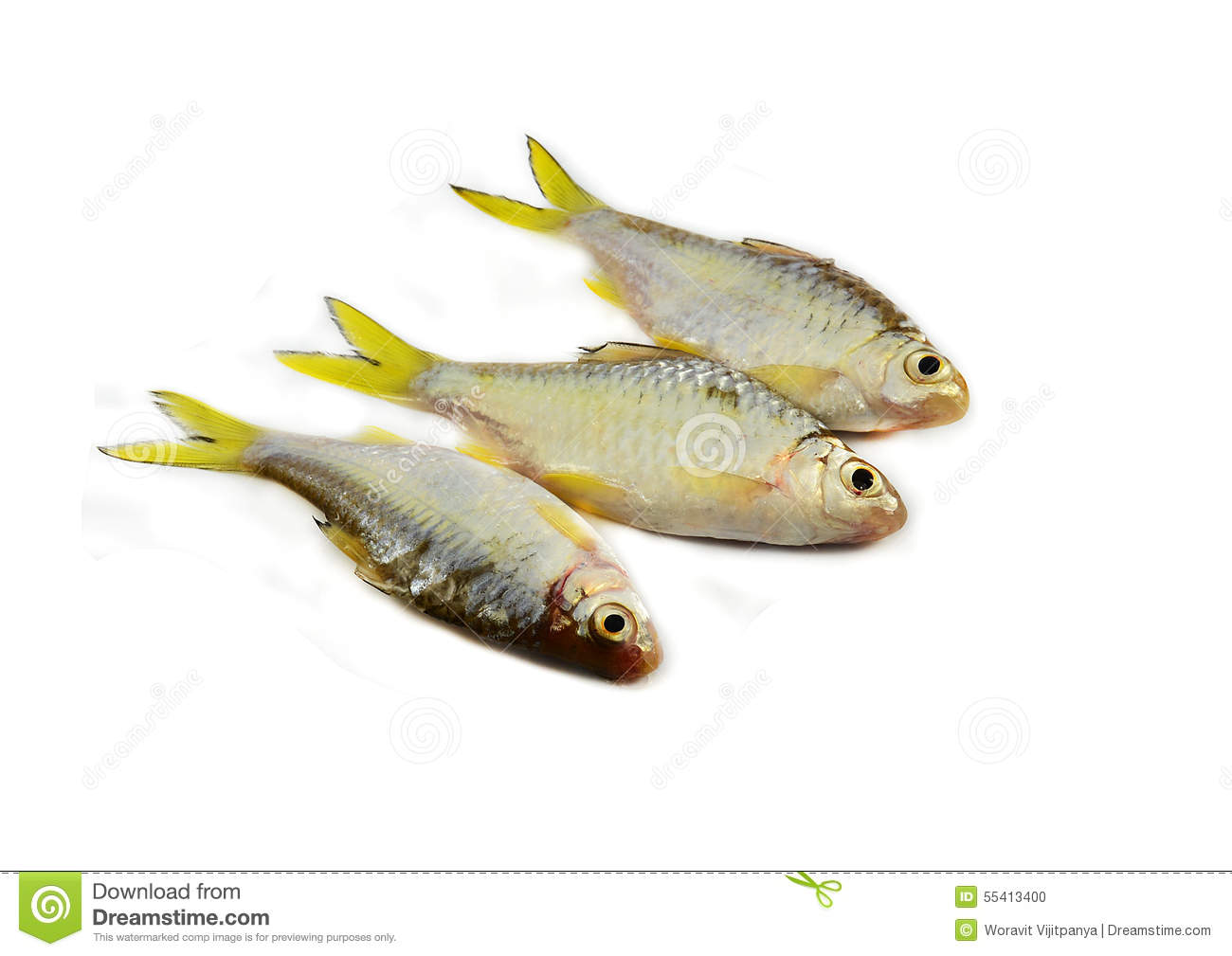 Small fish cyprinidae stock photo image of fishing for Small fish pictures
