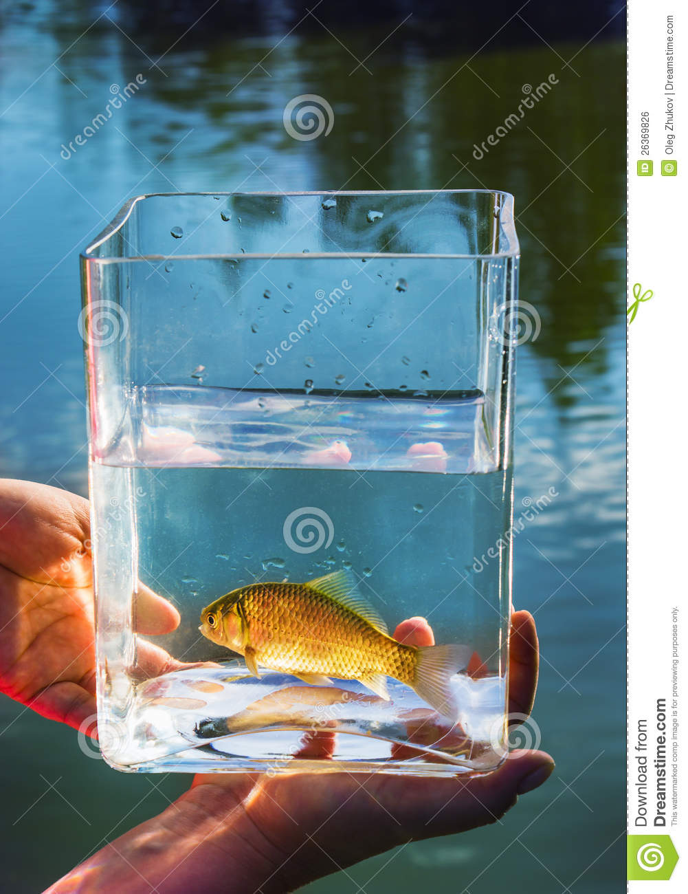 Small fish in a glass jar royalty free stock image image for Fish in a jar