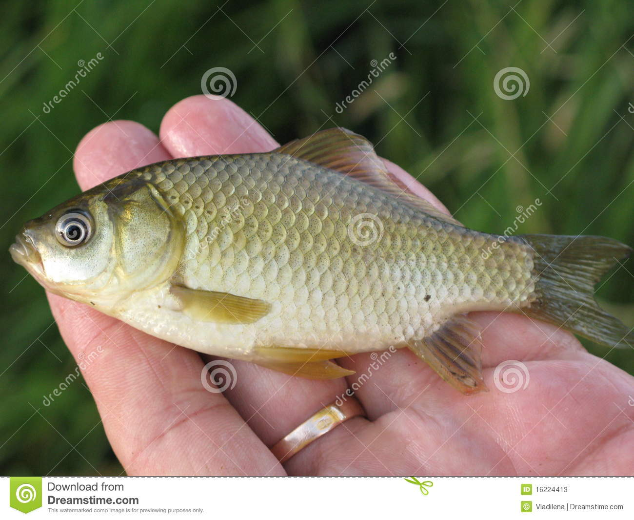 Small fish on a hand stock image image of scales small for Small fish pictures