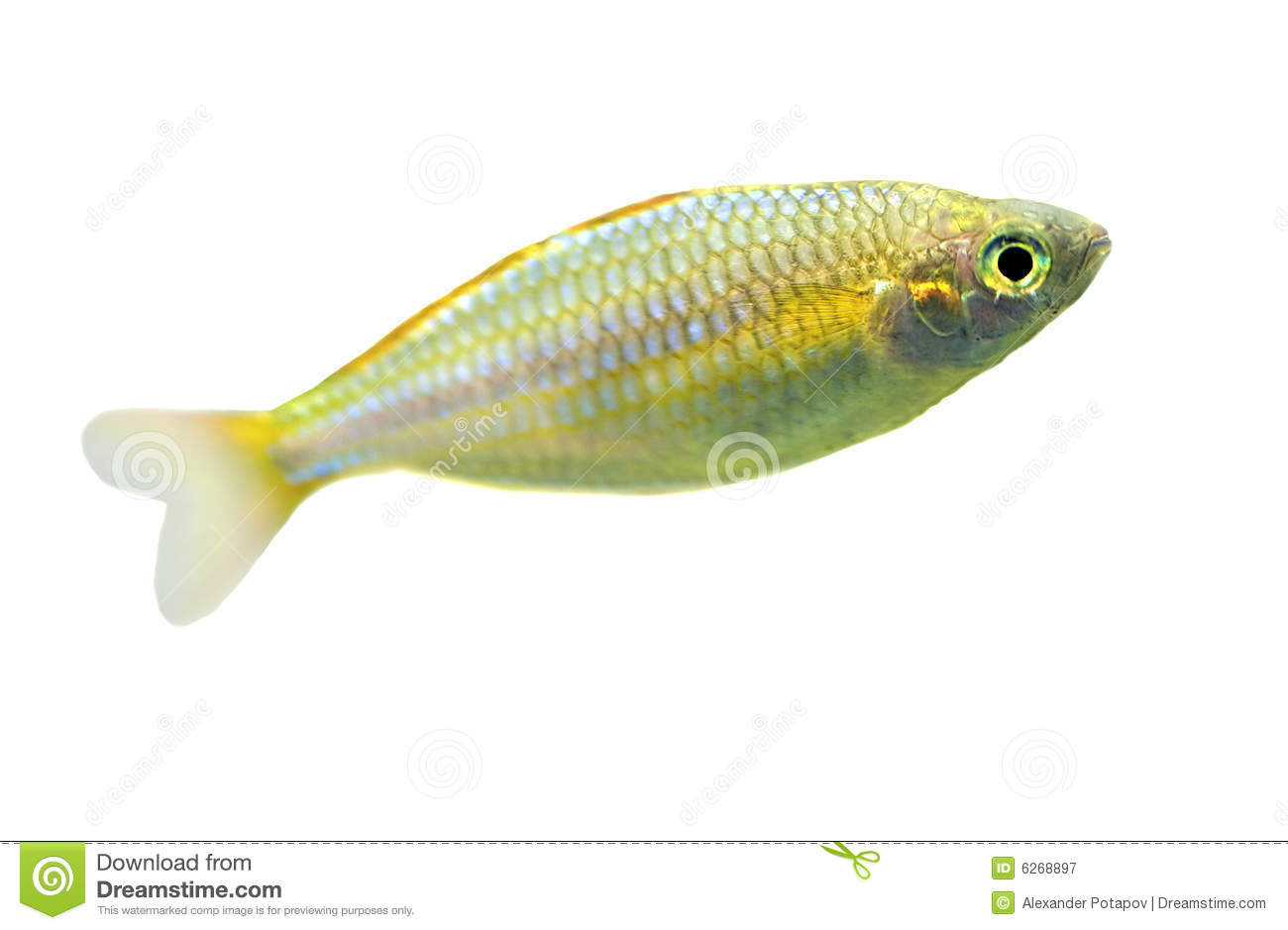 Smal fish related keywords smal fish long tail keywords for Small fish pictures