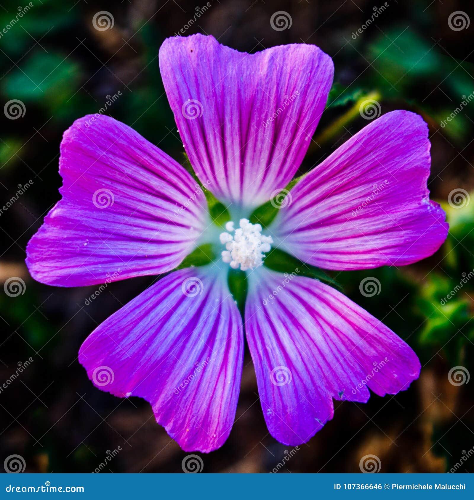 Small Light Purple Flower Stock Photo Image Of Beauty 107366646