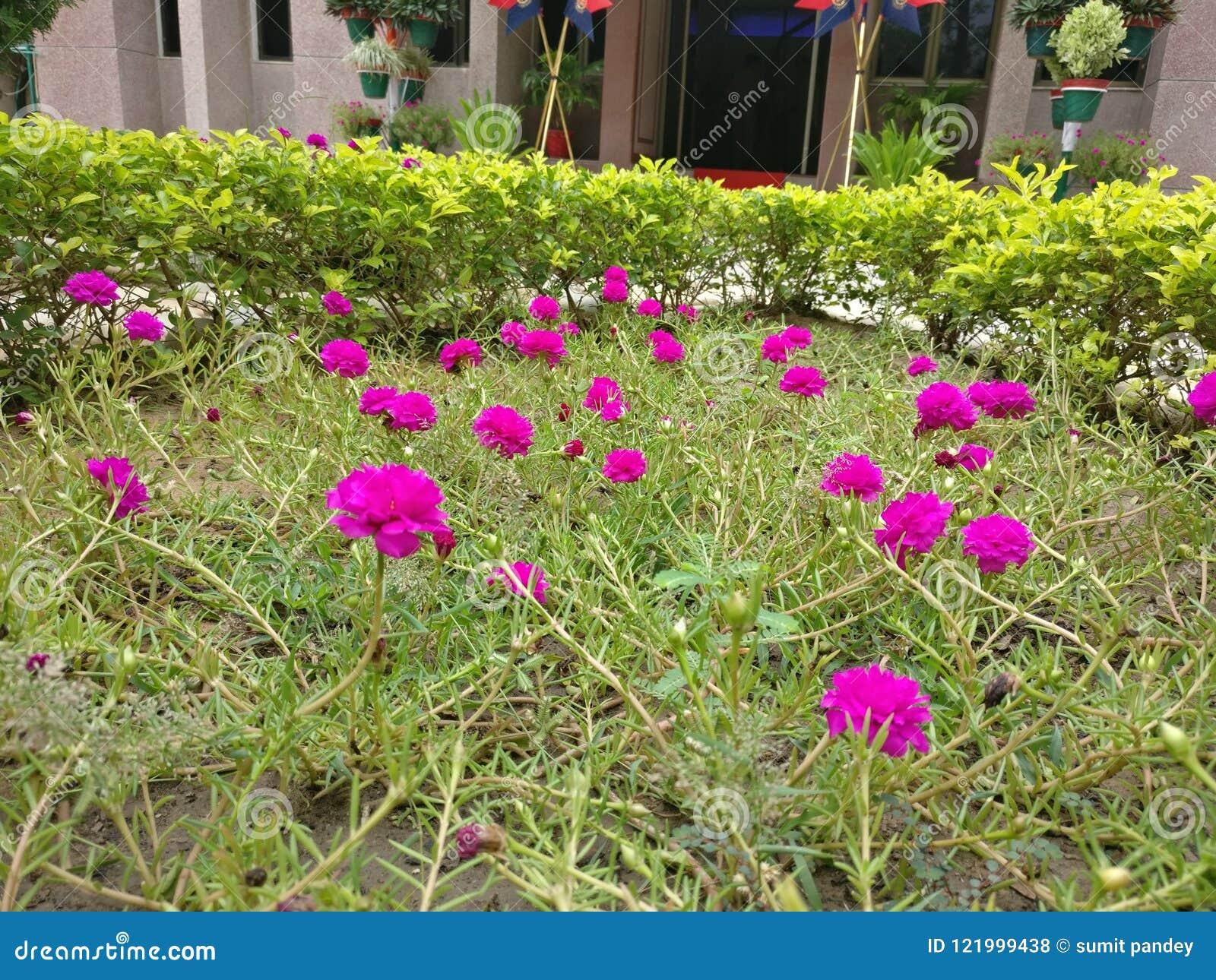 Small flowers beauty stock photo image of beautiful 121999438 download small flowers beauty stock photo image of beautiful 121999438 izmirmasajfo