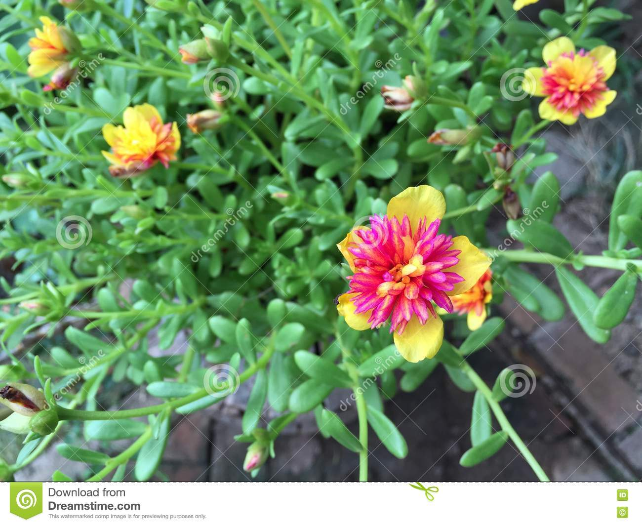 Small Hanging Basket Flowers: Small Flowers Outdoors Stock Photo