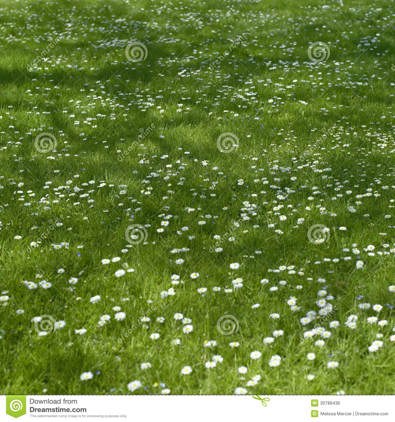 Small flowers stock photo image of blades flower happy 30789436 download comp mightylinksfo