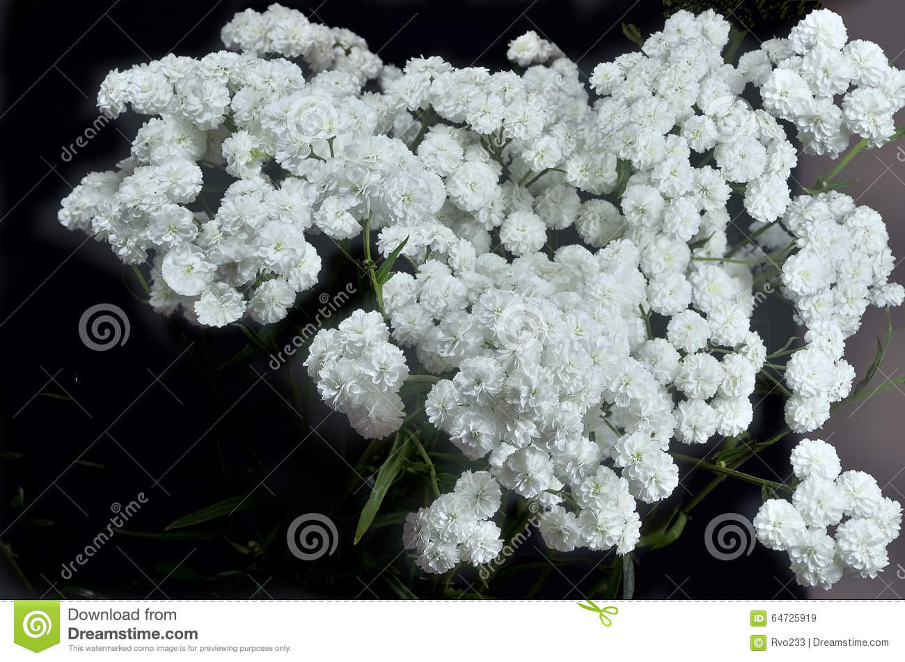Small fluffy white flowers stock image image of love 64725919 small fluffy white flowers mightylinksfo