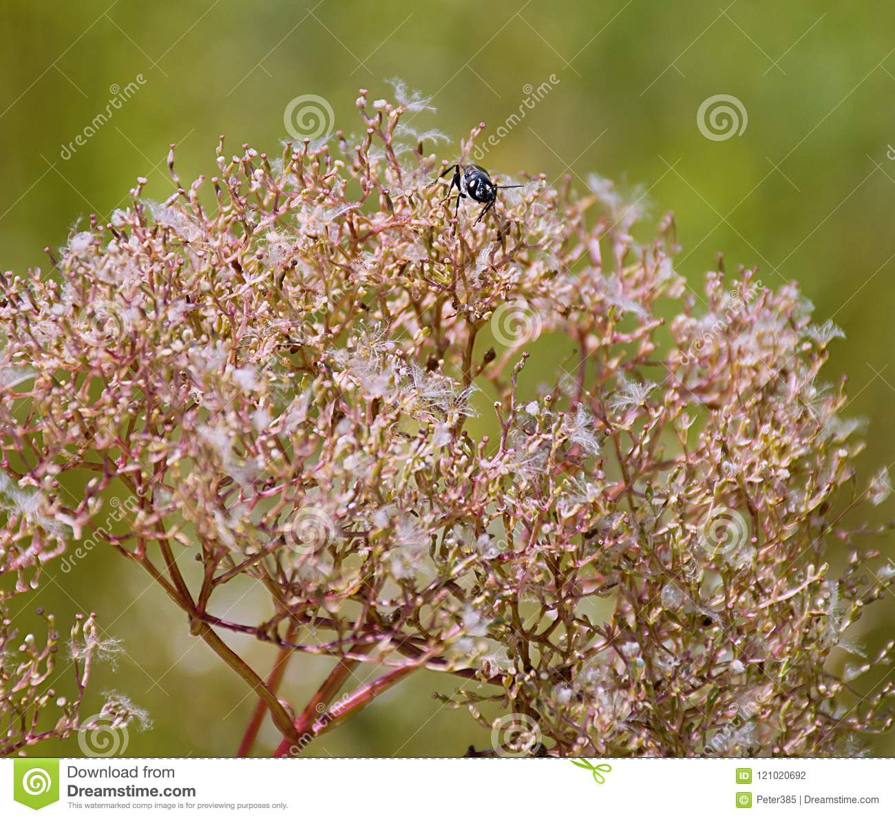 Download Small fly stock photo. Image of bush, brown, leaf, flies - 121020692