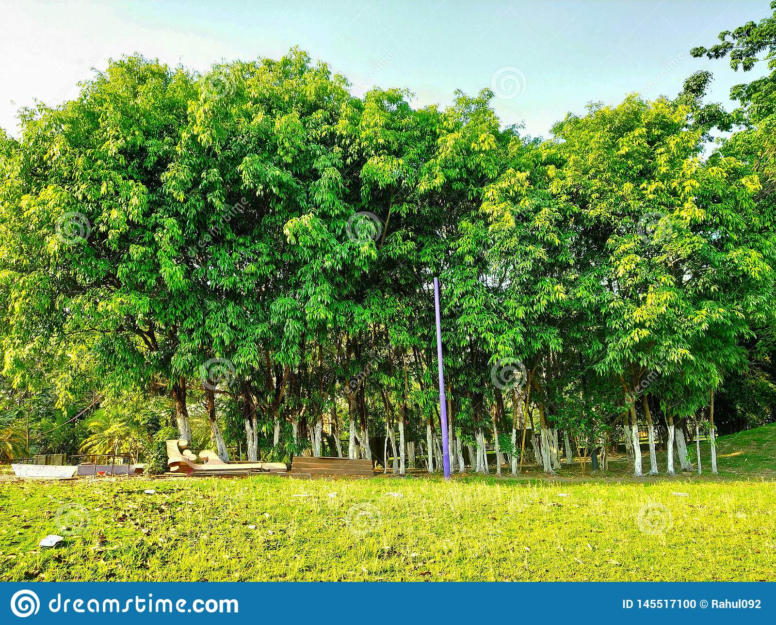 Small forest in garden looks so beautiful and green and blu sky background was magical so beautiful seen