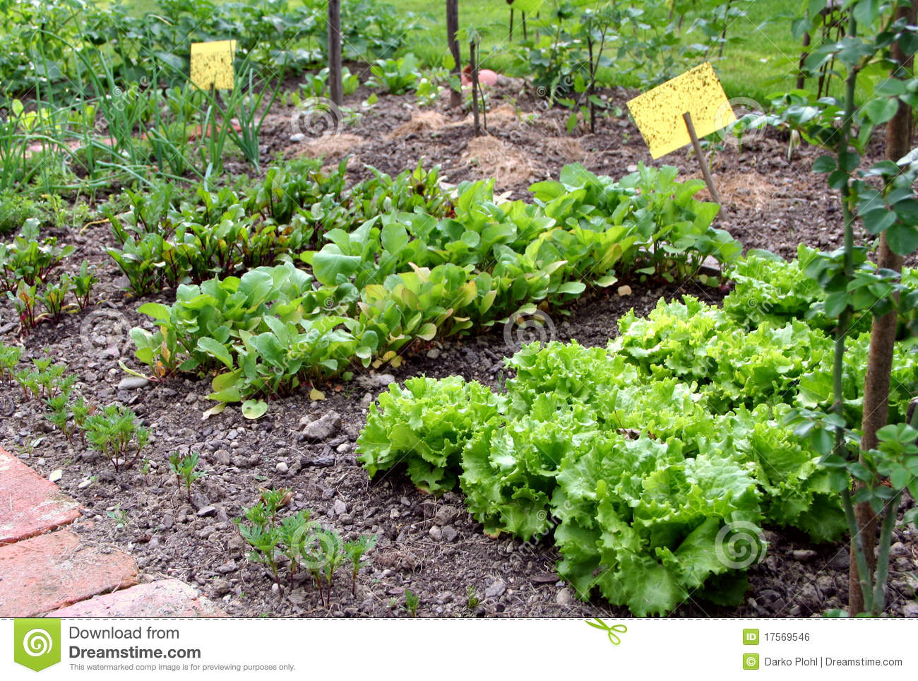 Backyard Vegetable Garden Business : Small garden vegetable bed and yellow pest control table in the