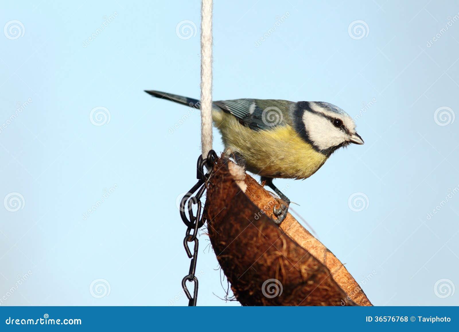 small garden bird royalty free stock photos image 36576768. Black Bedroom Furniture Sets. Home Design Ideas