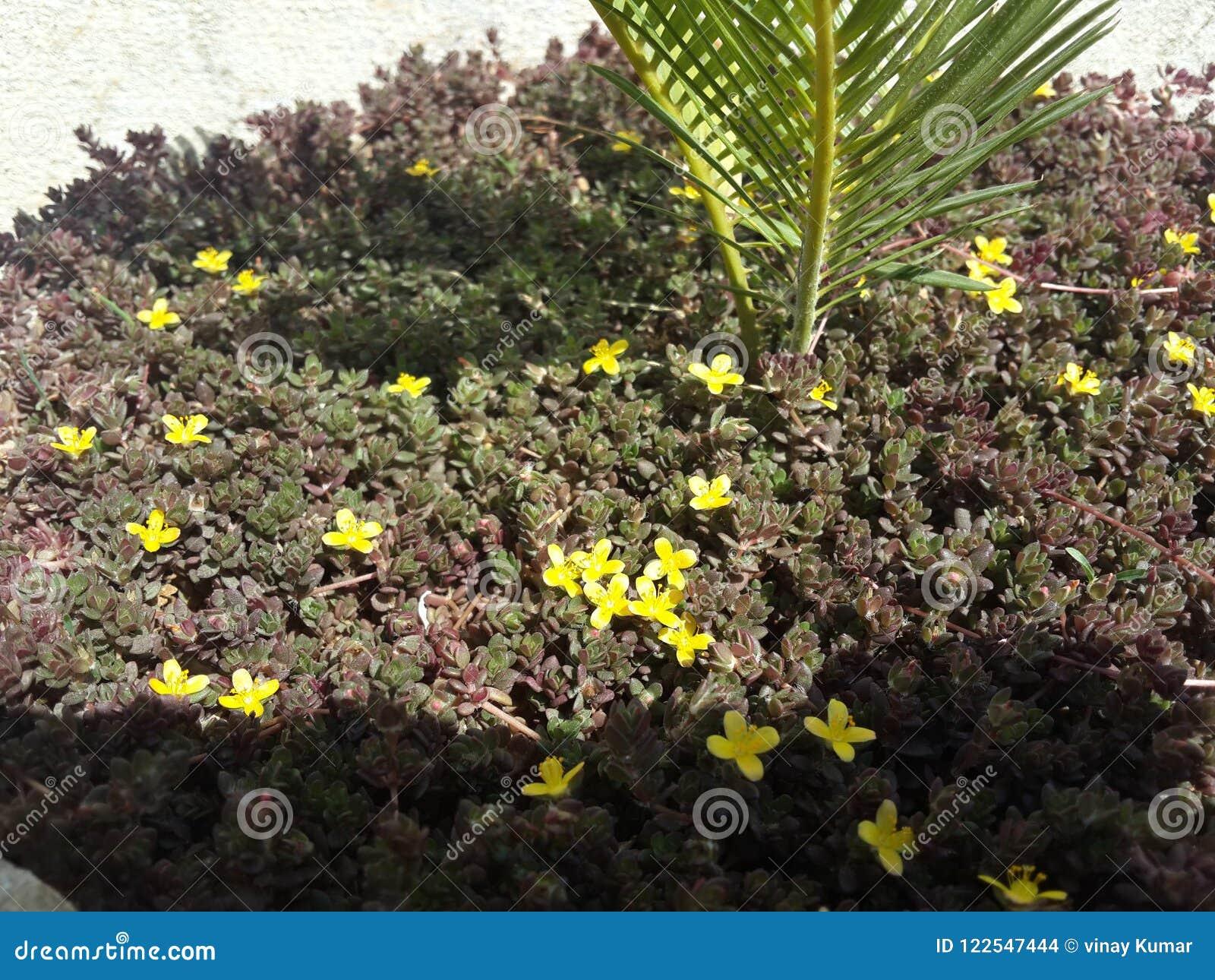 Small garden plants stock photo. Image of yellow, garden - 122547444